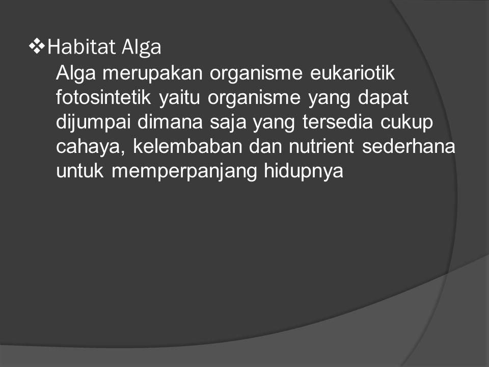 Habitat Alga