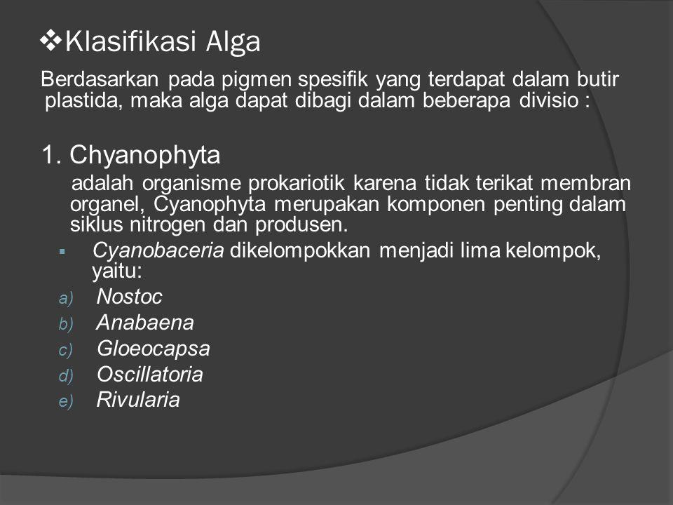 Klasifikasi Alga 1. Chyanophyta