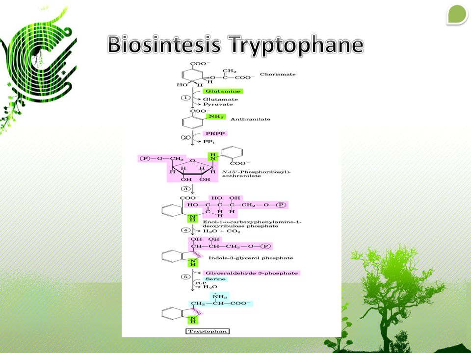 Biosintesis Tryptophane