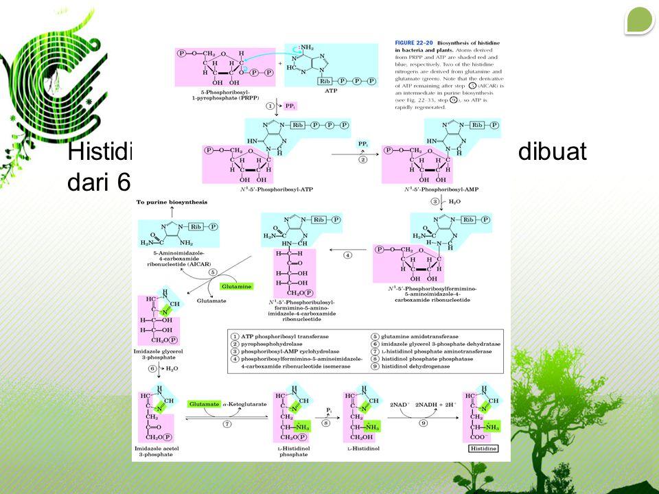 Biosintesis Histidine