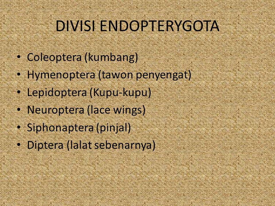DIVISI ENDOPTERYGOTA Coleoptera (kumbang)