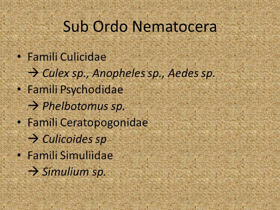 Sub Ordo Nematocera Famili Culicidae
