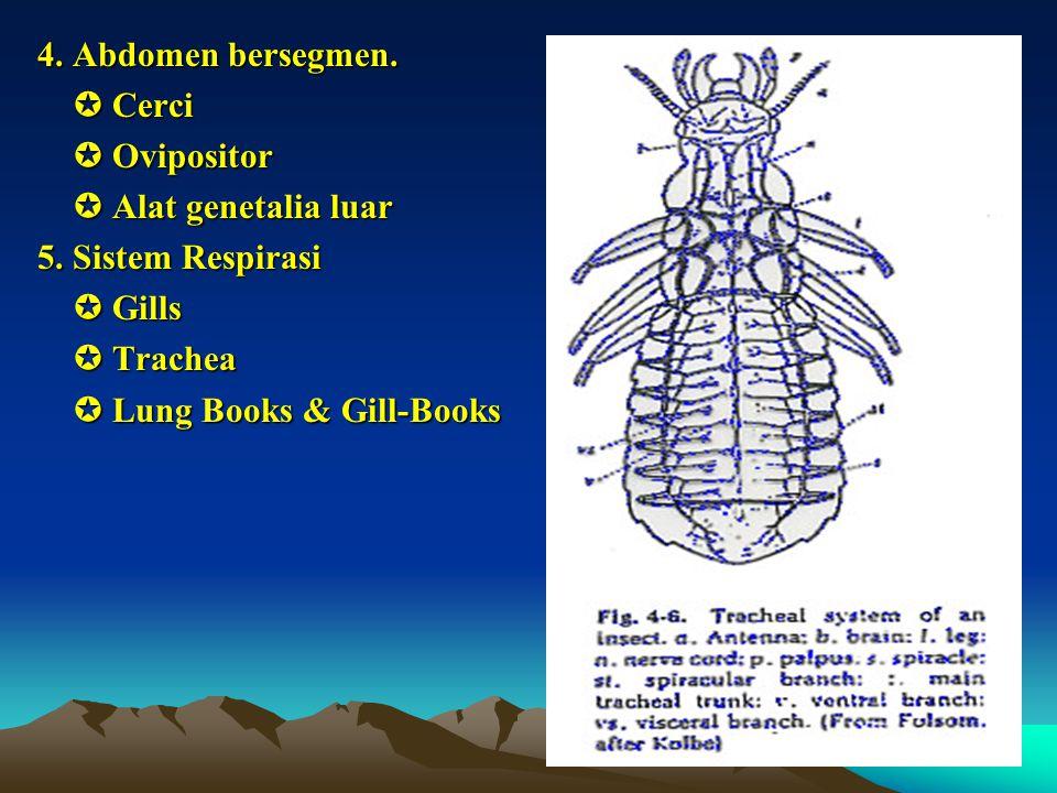 4. Abdomen bersegmen.  Cerci.  Ovipositor.  Alat genetalia luar. 5. Sistem Respirasi.  Gills.