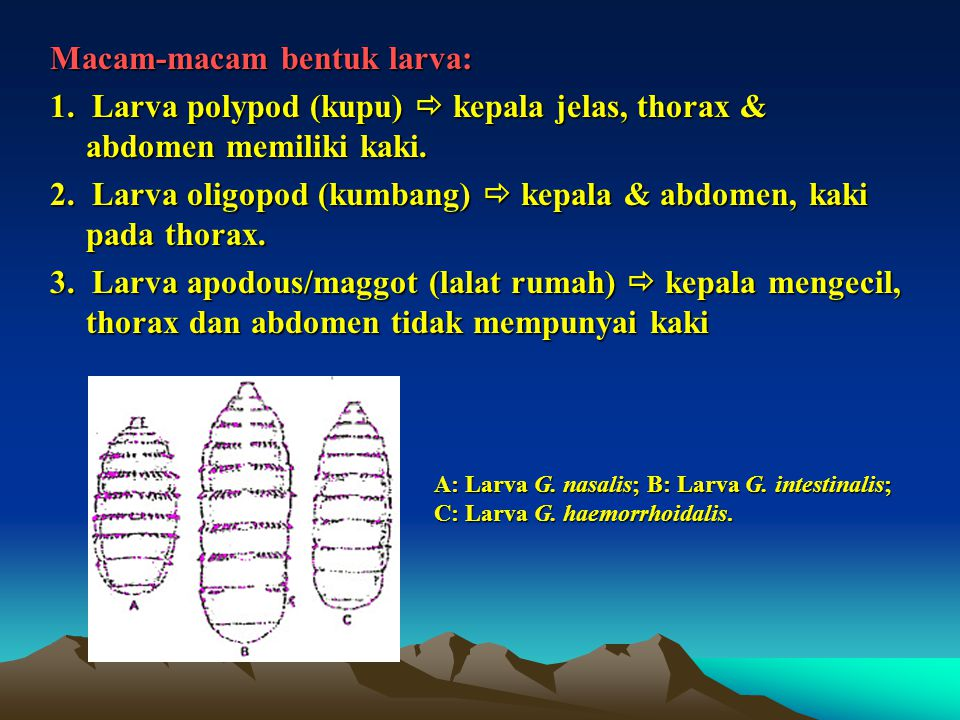 Macam-macam bentuk larva: