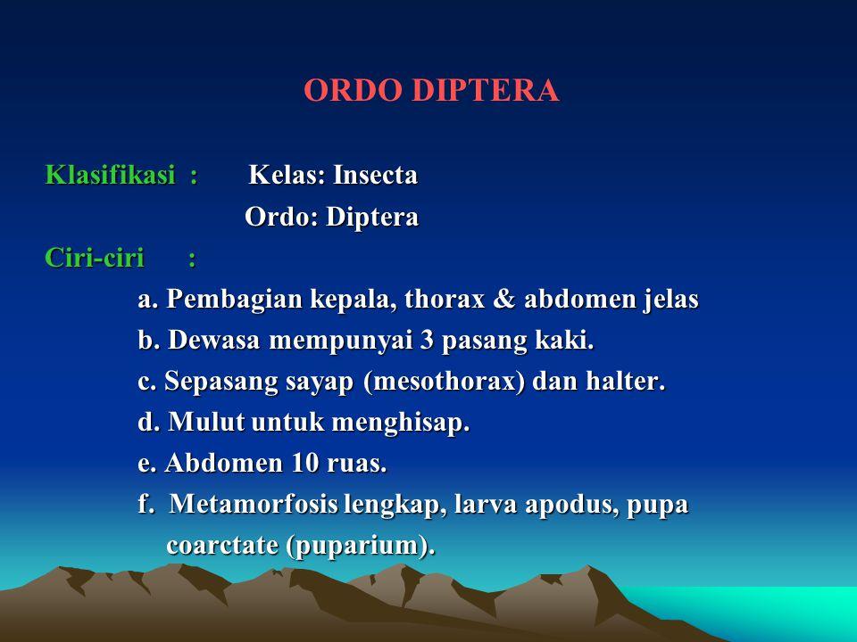 ORDO DIPTERA Klasifikasi : Kelas: Insecta Ordo: Diptera Ciri-ciri :