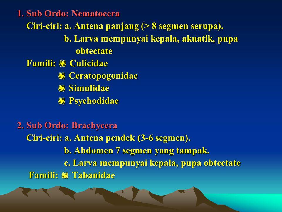 1. Sub Ordo: Nematocera Ciri-ciri: a. Antena panjang (> 8 segmen serupa). b. Larva mempunyai kepala, akuatik, pupa.