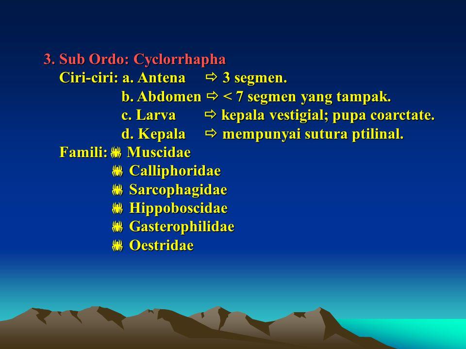 3. Sub Ordo: Cyclorrhapha