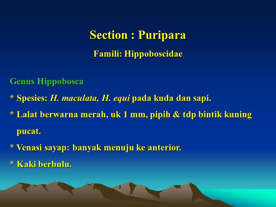 Famili: Hippoboscidae