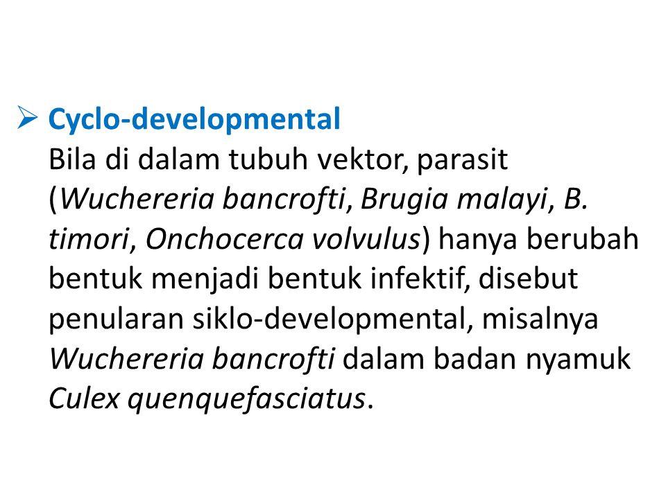 Cyclo-developmental Bila di dalam tubuh vektor, parasit (Wuchereria bancrofti, Brugia malayi, B.