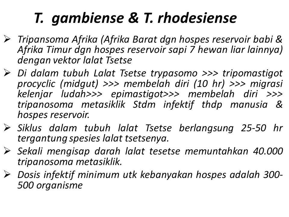 T. gambiense & T. rhodesiense