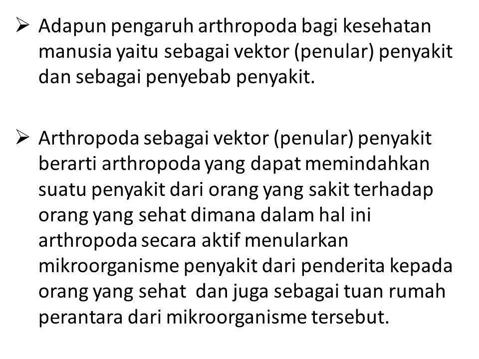 Adapun pengaruh arthropoda bagi kesehatan manusia yaitu sebagai vektor (penular) penyakit dan sebagai penyebab penyakit.