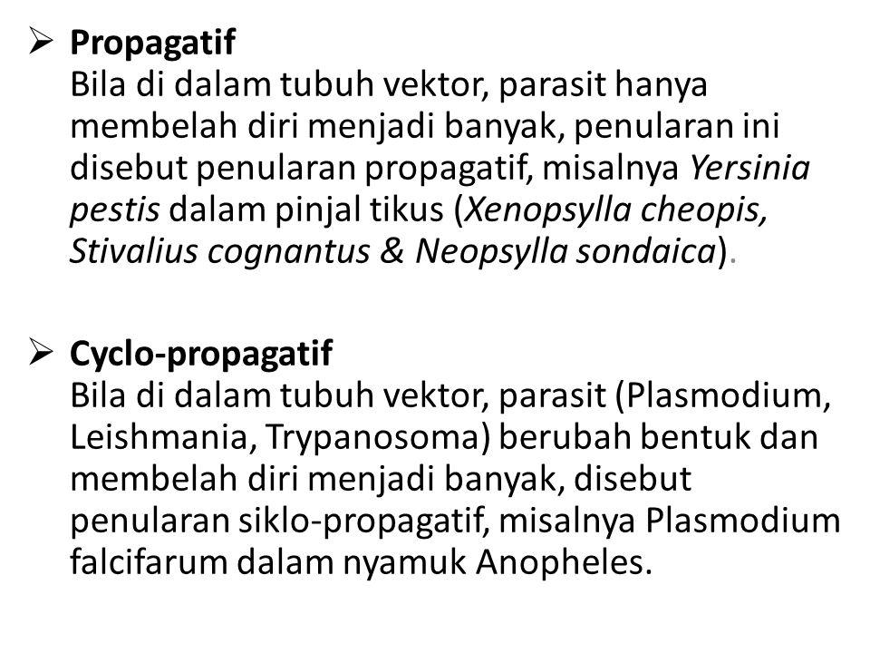 Propagatif Bila di dalam tubuh vektor, parasit hanya membelah diri menjadi banyak, penularan ini disebut penularan propagatif, misalnya Yersinia pestis dalam pinjal tikus (Xenopsylla cheopis, Stivalius cognantus & Neopsylla sondaica).