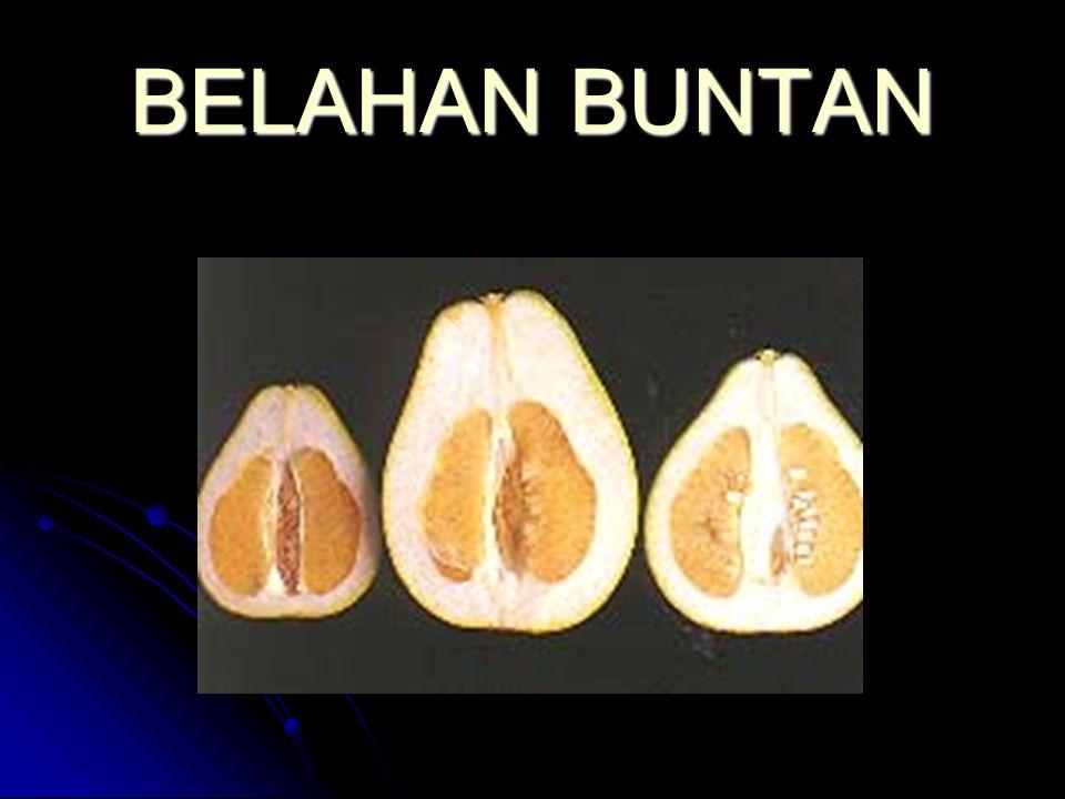 BELAHAN BUNTAN