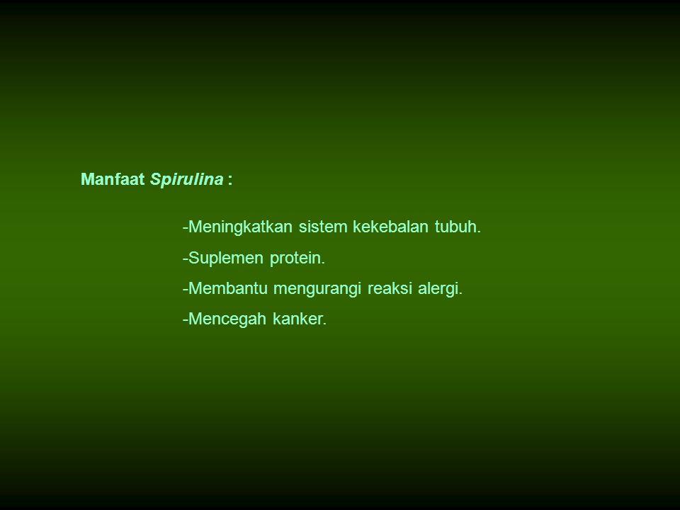 Manfaat Spirulina : Meningkatkan sistem kekebalan tubuh. Suplemen protein. Membantu mengurangi reaksi alergi.