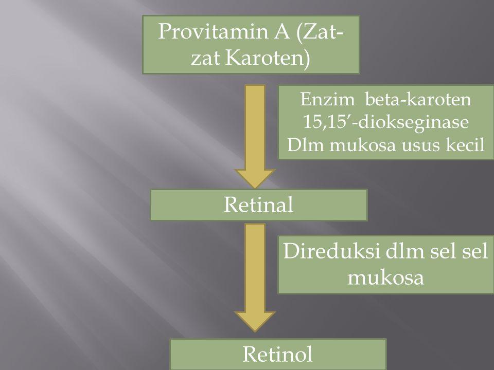 Provitamin A (Zat-zat Karoten)