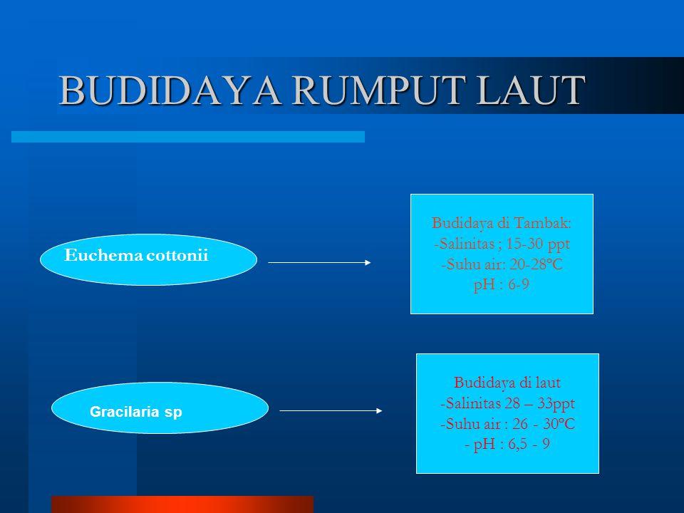 BUDIDAYA RUMPUT LAUT Euchema cottonii Budidaya di Tambak: