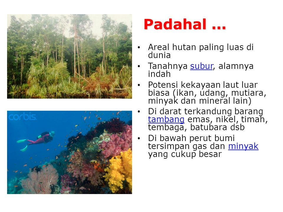 Padahal ... Areal hutan paling luas di dunia