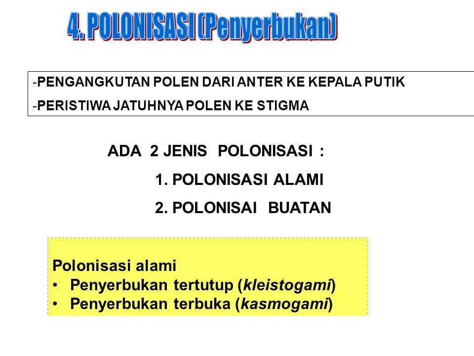 4. POLONISASI (Penyerbukan)