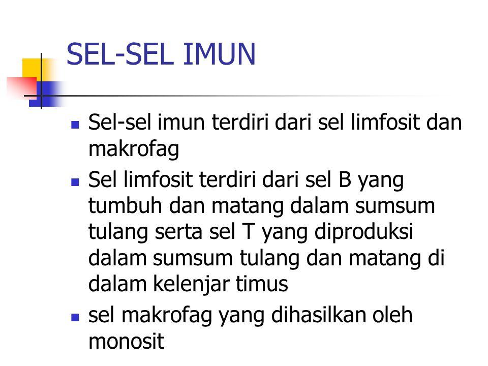 SEL-SEL IMUN Sel-sel imun terdiri dari sel limfosit dan makrofag