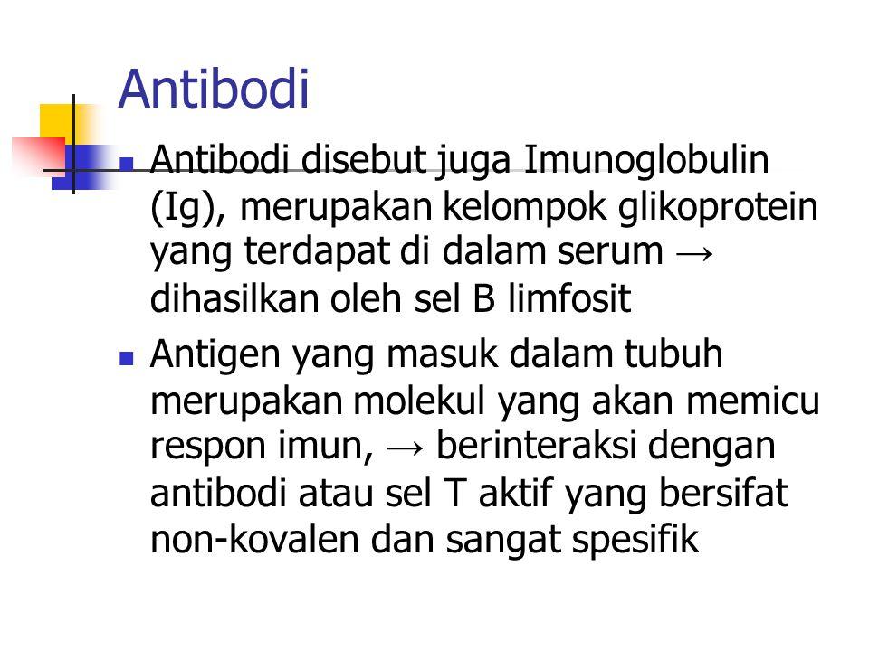 Antibodi Antibodi disebut juga Imunoglobulin (Ig), merupakan kelompok glikoprotein yang terdapat di dalam serum → dihasilkan oleh sel B limfosit.