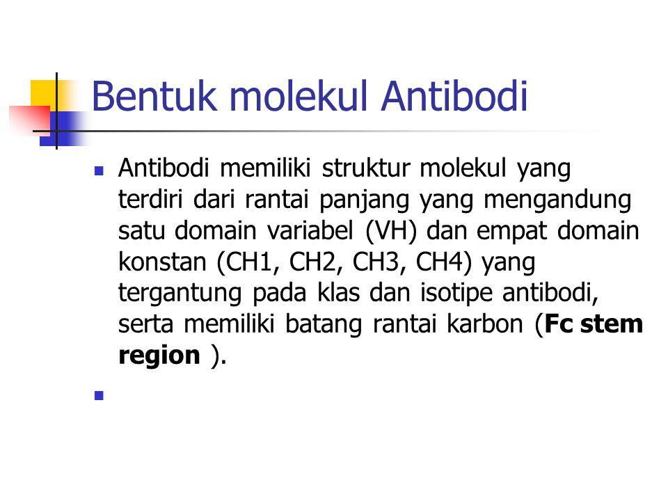 Bentuk molekul Antibodi