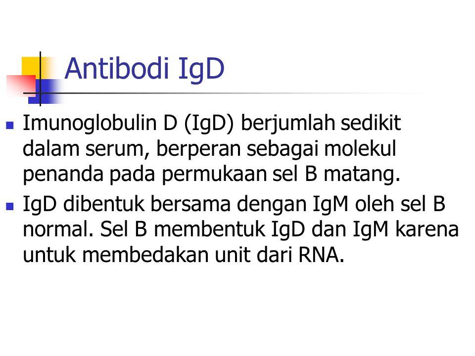 Antibodi IgD Imunoglobulin D (IgD) berjumlah sedikit dalam serum, berperan sebagai molekul penanda pada permukaan sel B matang.