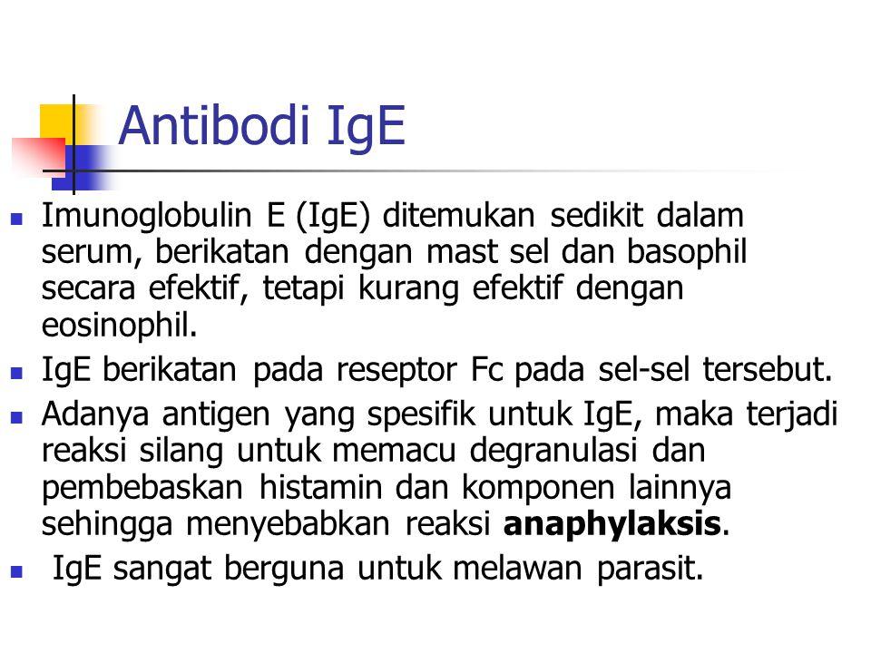 Antibodi IgE