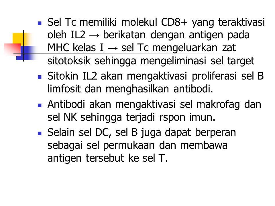 Sel Tc memiliki molekul CD8+ yang teraktivasi oleh IL2 → berikatan dengan antigen pada MHC kelas I → sel Tc mengeluarkan zat sitotoksik sehingga mengeliminasi sel target