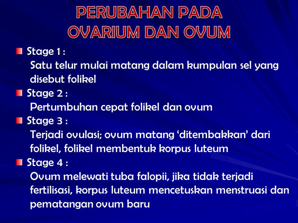 PERUBAHAN PADA OVARIUM DAN OVUM Stage 1 :