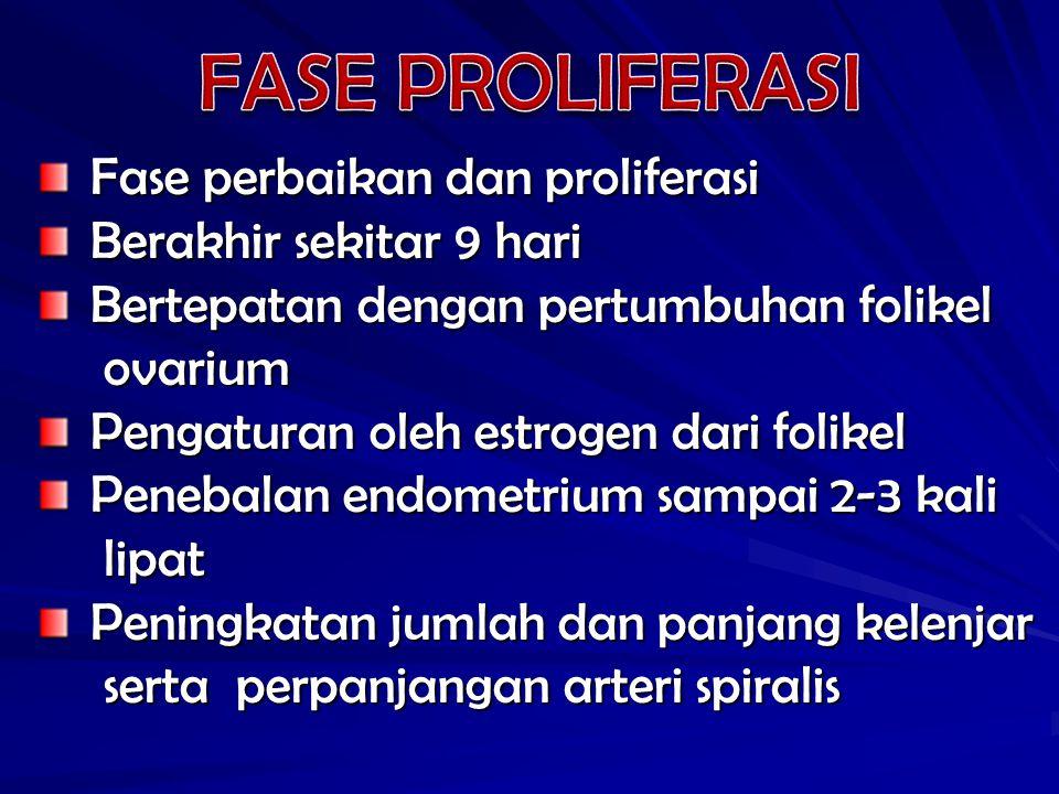 FASE PROLIFERASI Fase perbaikan dan proliferasi