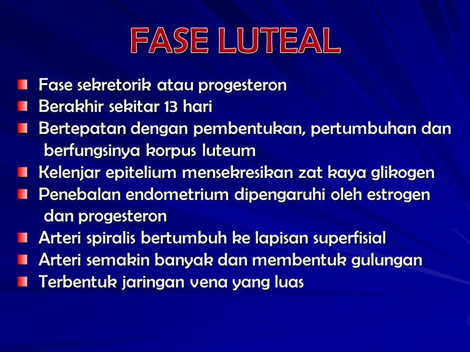 FASE LUTEAL Fase sekretorik atau progesteron Berakhir sekitar 13 hari