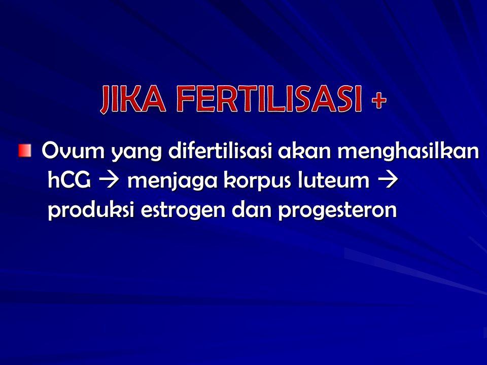 JIKA FERTILISASI + Ovum yang difertilisasi akan menghasilkan
