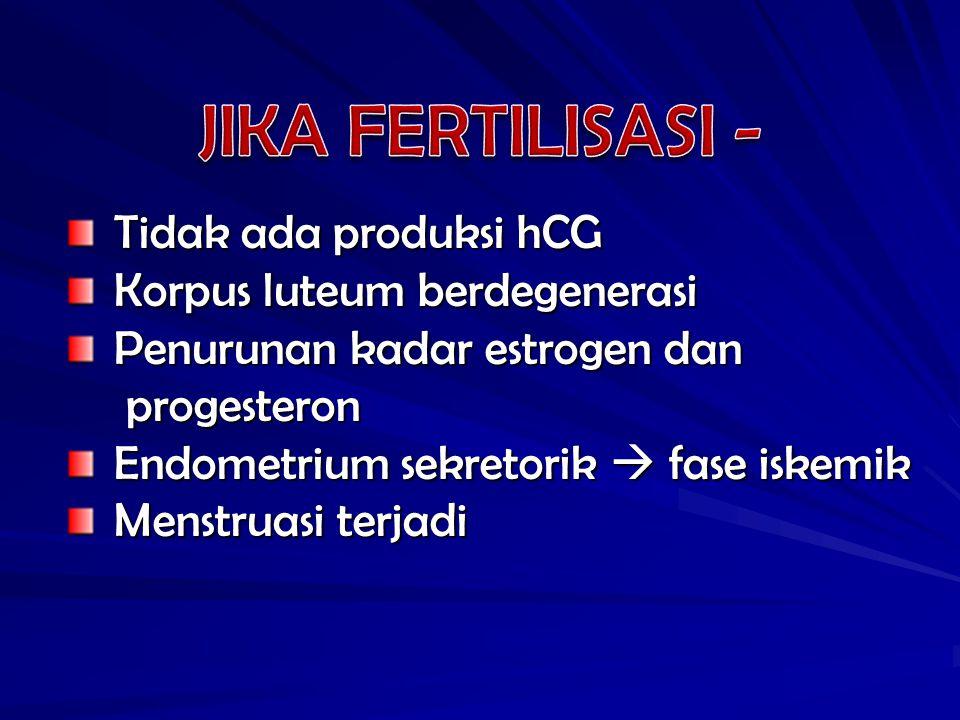 JIKA FERTILISASI - Tidak ada produksi hCG Korpus luteum berdegenerasi