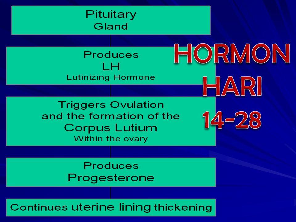 HORMON HARI 14-28
