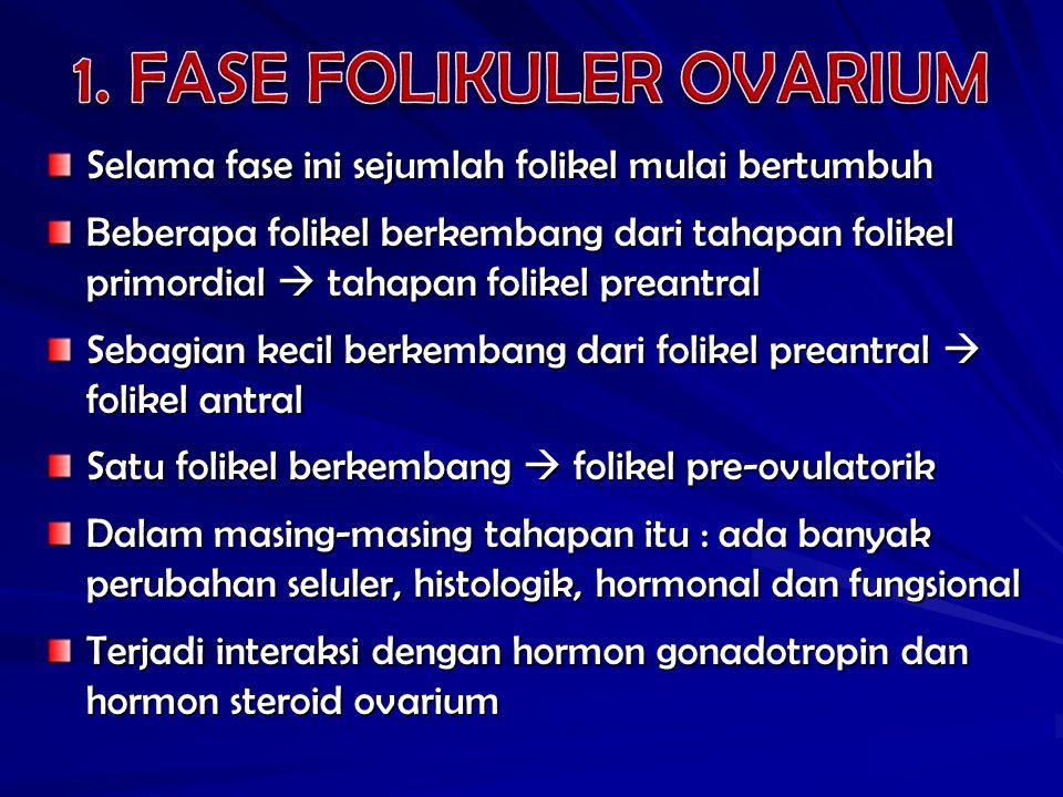 1. FASE FOLIKULER OVARIUM