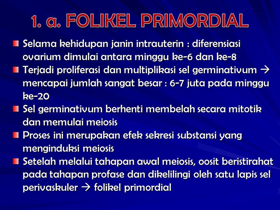 1. a. FOLIKEL PRIMORDIAL Selama kehidupan janin intrauterin : diferensiasi ovarium dimulai antara minggu ke-6 dan ke-8.