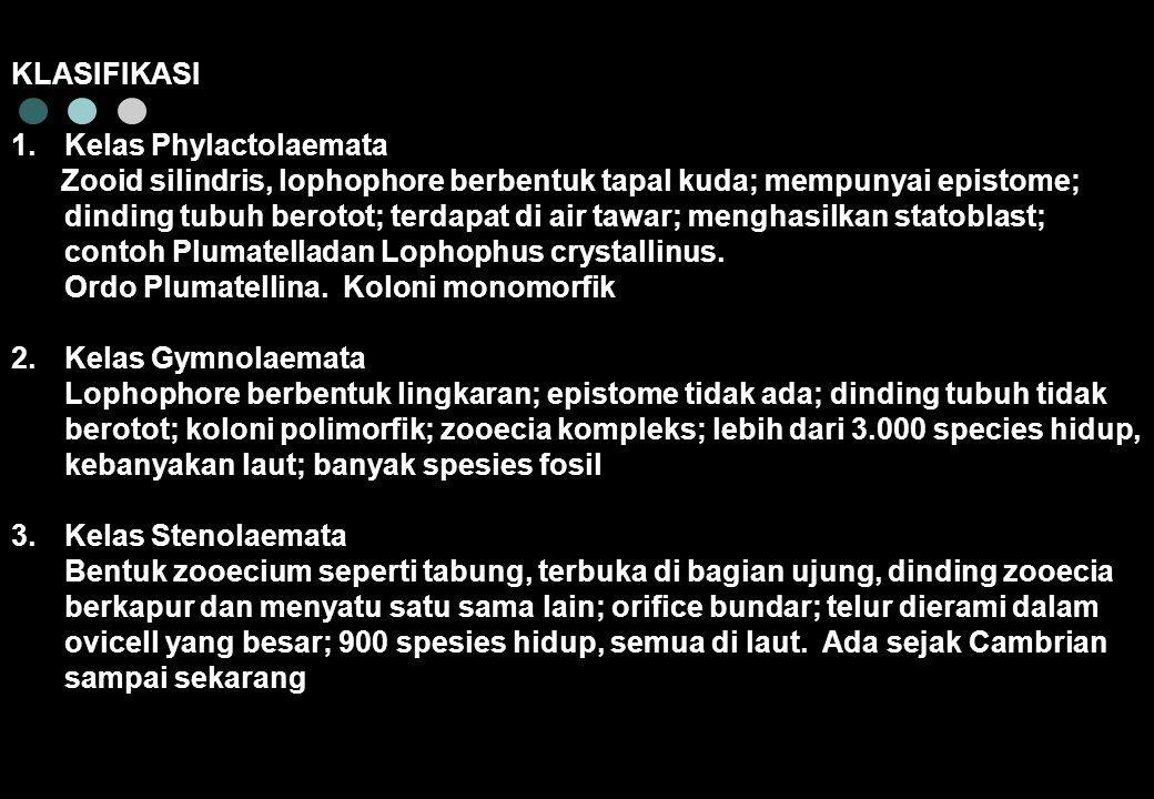 KLASIFIKASI Kelas Phylactolaemata.