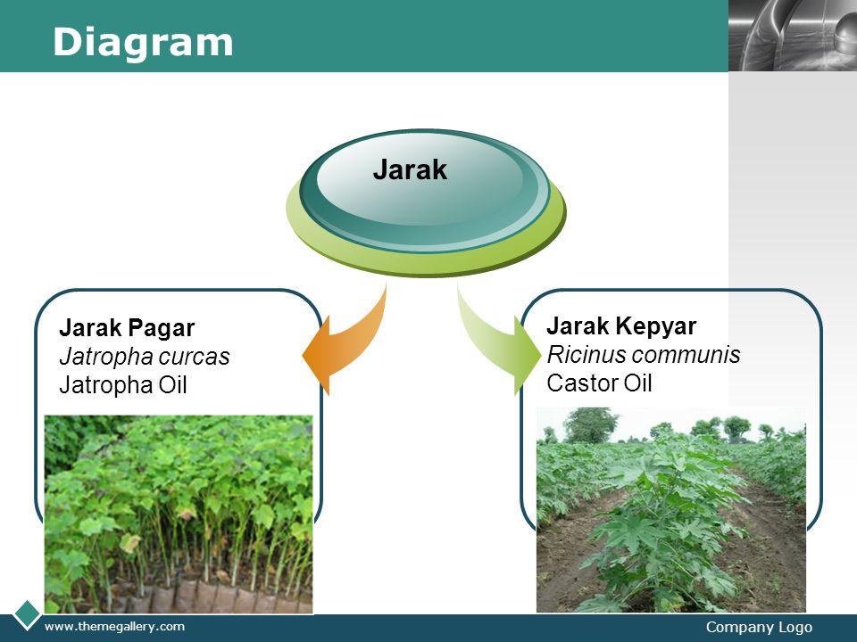 Diagram Jarak Jarak Pagar Jarak Kepyar Jatropha curcas