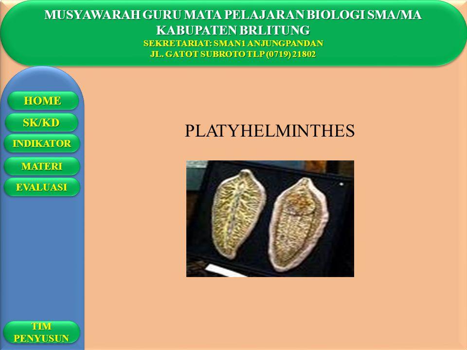 PLATYHELMINTHES MUSYAWARAH GURU MATA PELAJARAN BIOLOGI SMA/MA