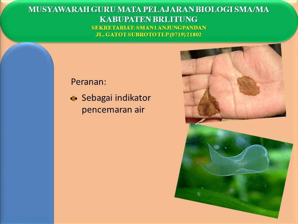 Peranan: Sebagai indikator pencemaran air