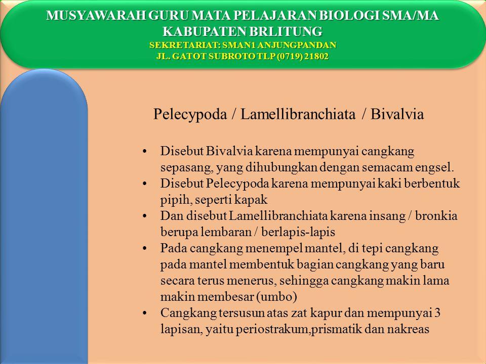 Pelecypoda / Lamellibranchiata / Bivalvia