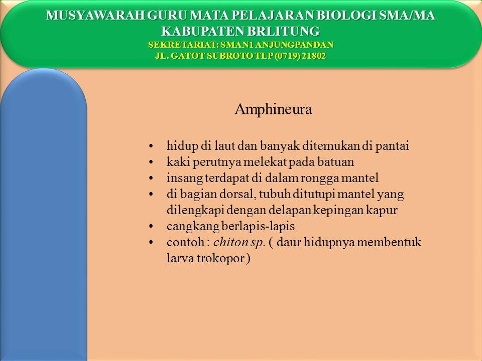 Amphineura MUSYAWARAH GURU MATA PELAJARAN BIOLOGI SMA/MA