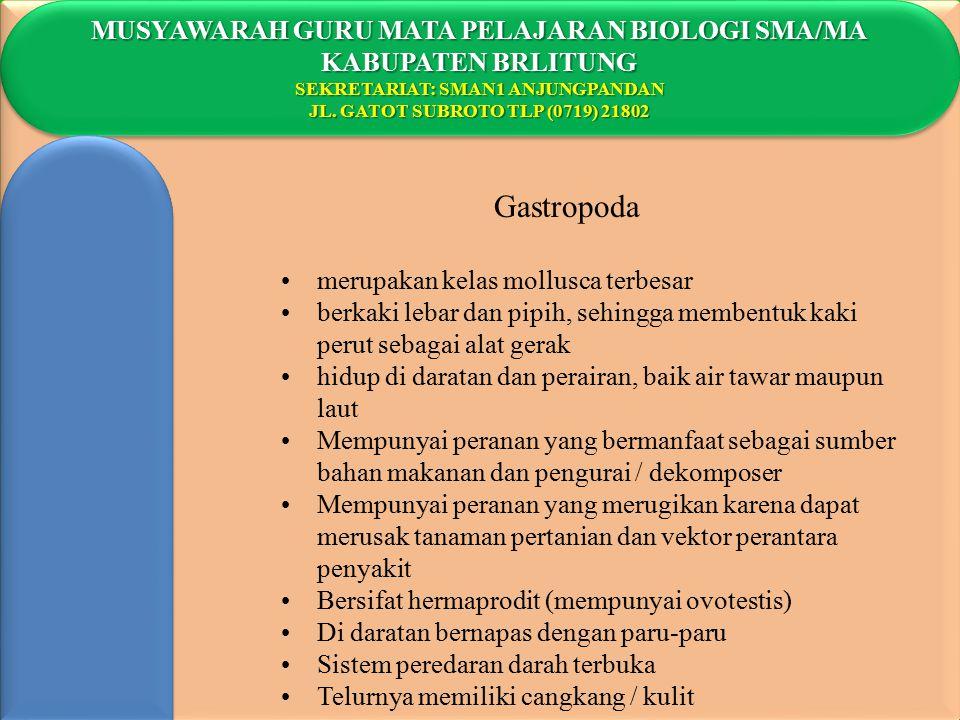 Gastropoda MUSYAWARAH GURU MATA PELAJARAN BIOLOGI SMA/MA