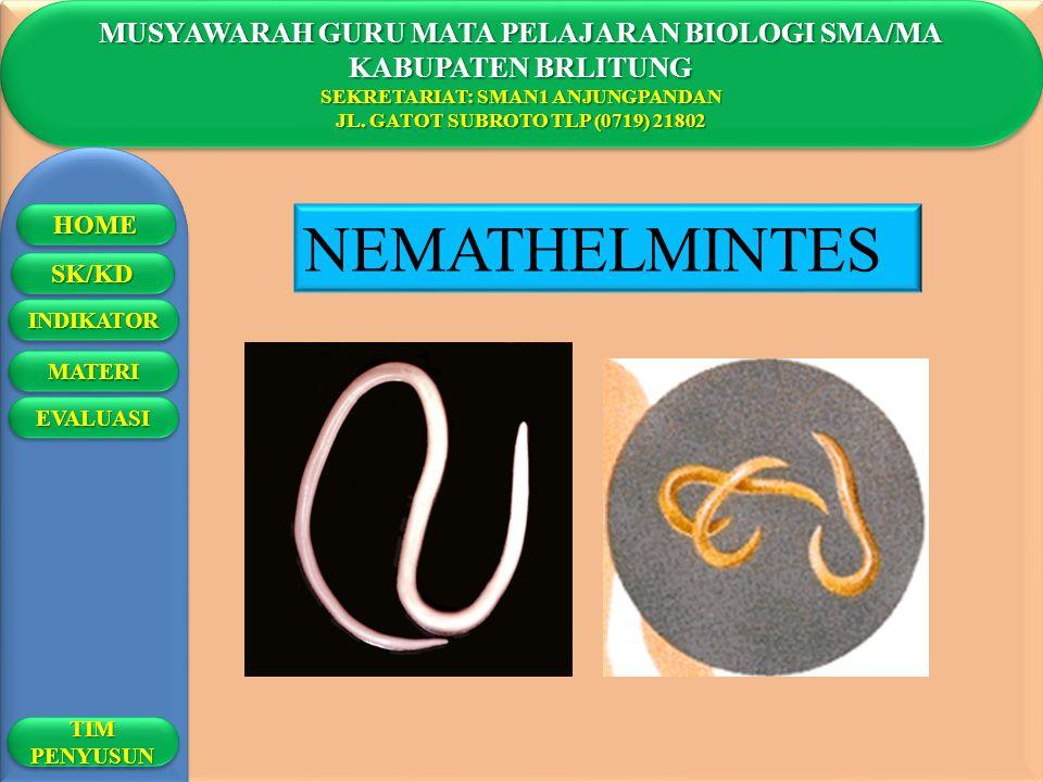 NEMATHELMINTES MUSYAWARAH GURU MATA PELAJARAN BIOLOGI SMA/MA
