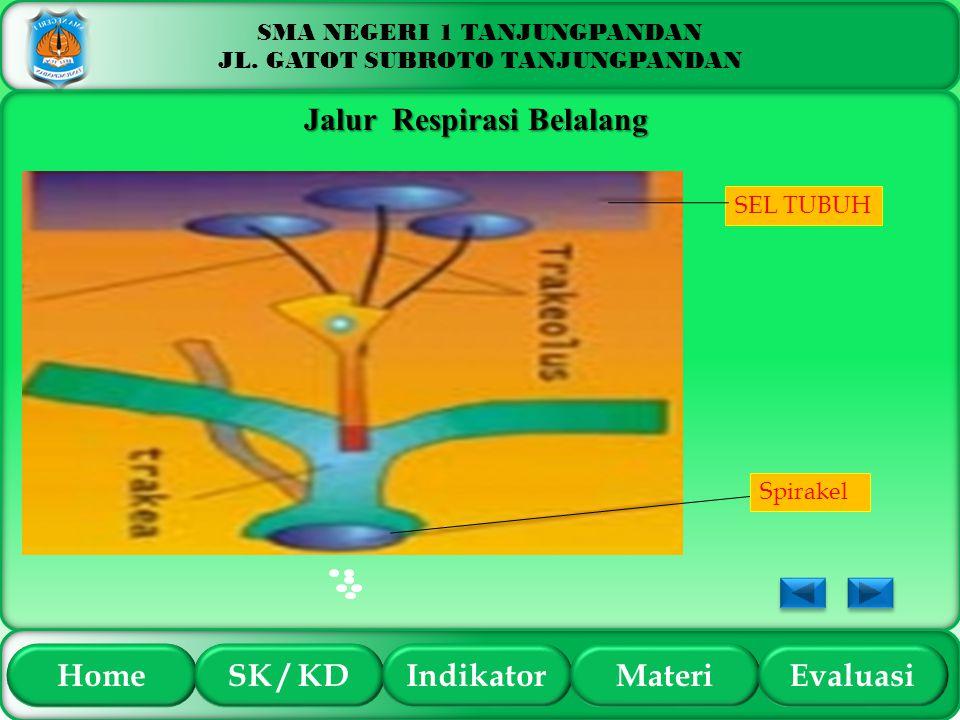 Jalur Respirasi Belalang