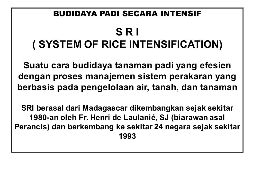 BUDIDAYA PADI SECARA INTENSIF ( SYSTEM OF RICE INTENSIFICATION)