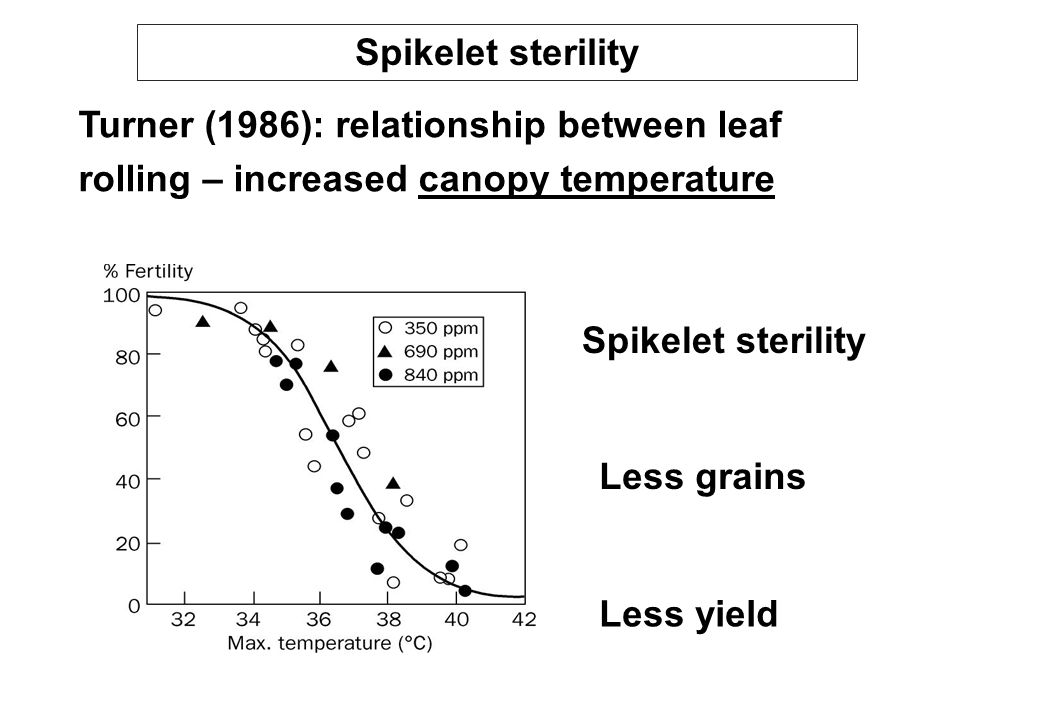 Spikelet sterility Turner (1986): relationship between leaf rolling – increased canopy temperature.