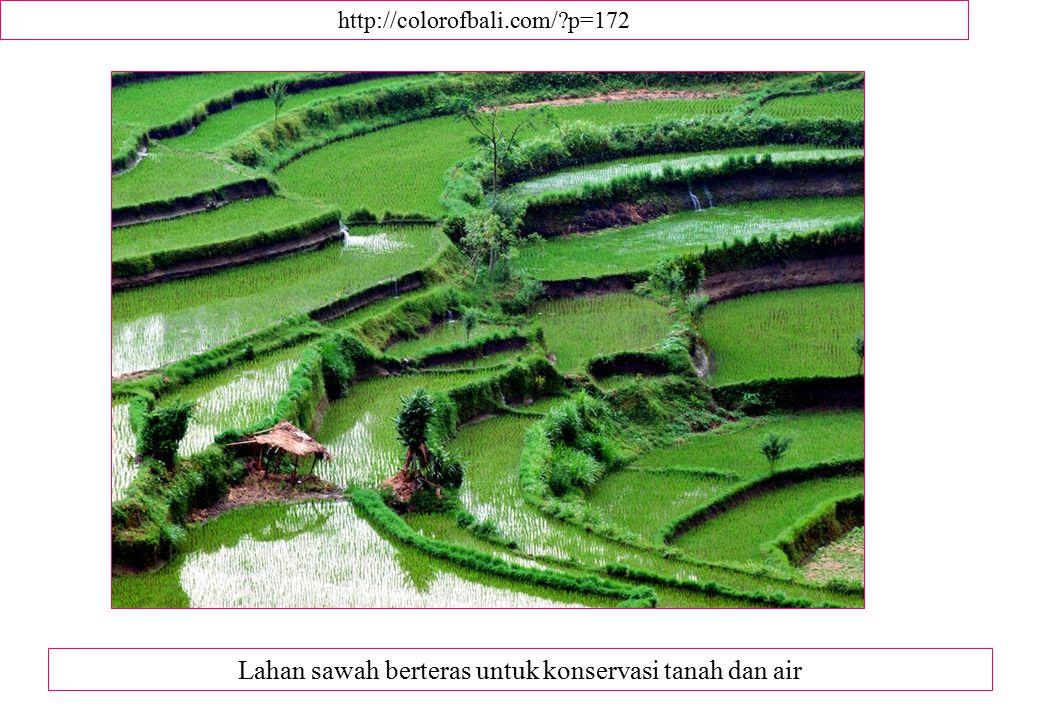 Lahan sawah berteras untuk konservasi tanah dan air