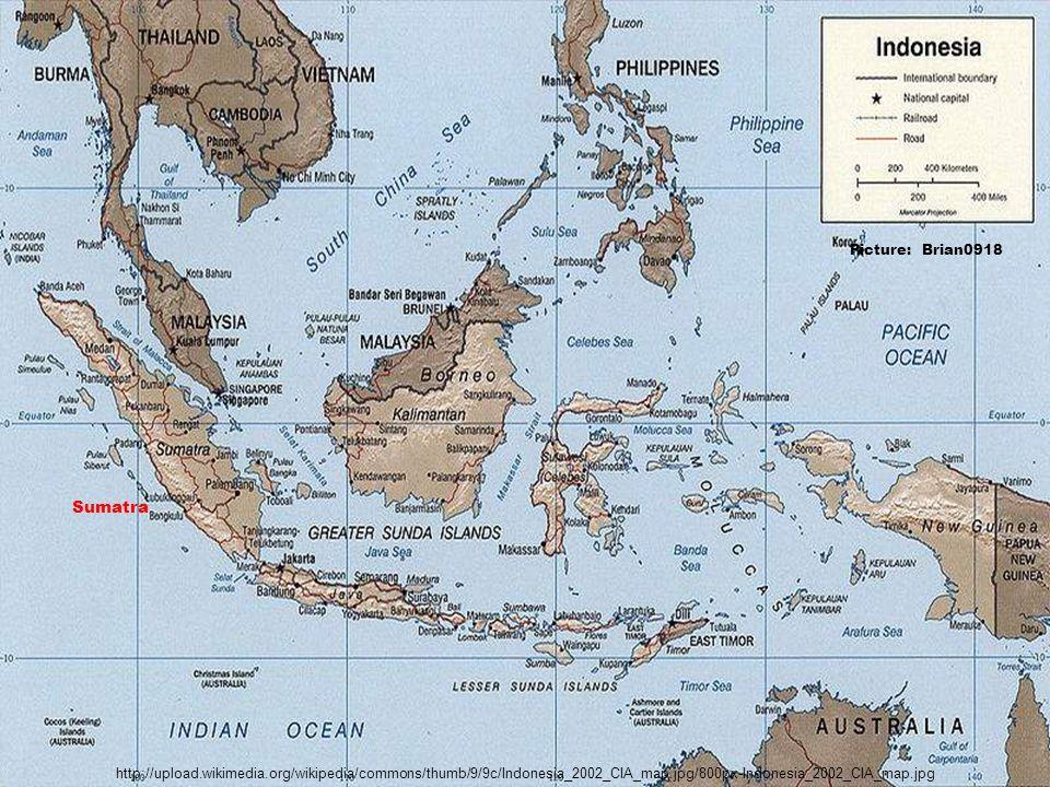 Sumatra Picture: Brian0918