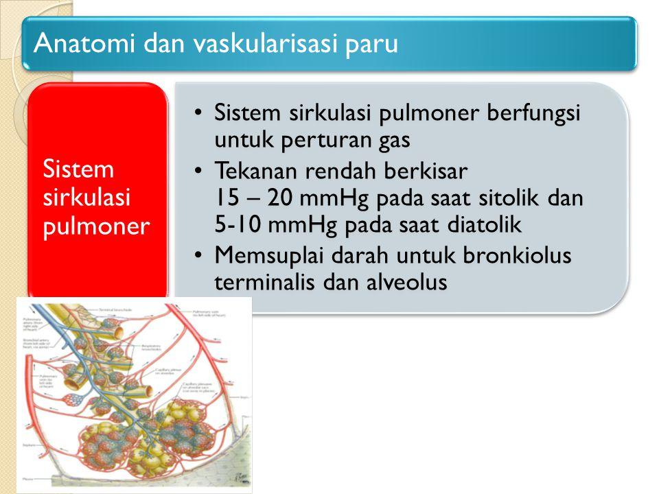 Anatomi dan vaskularisasi paru
